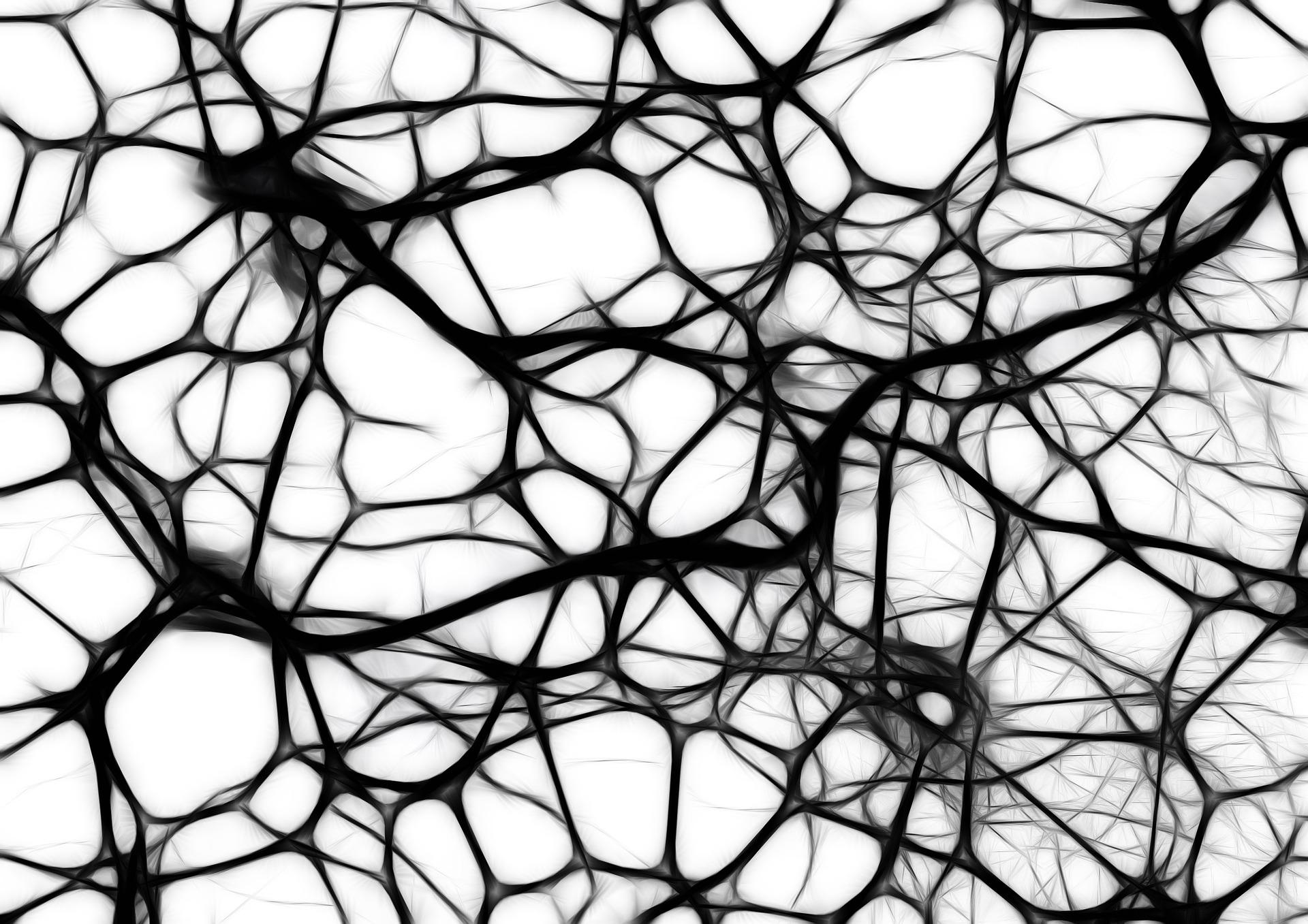 Neuronen Gehirn und Vernetzung