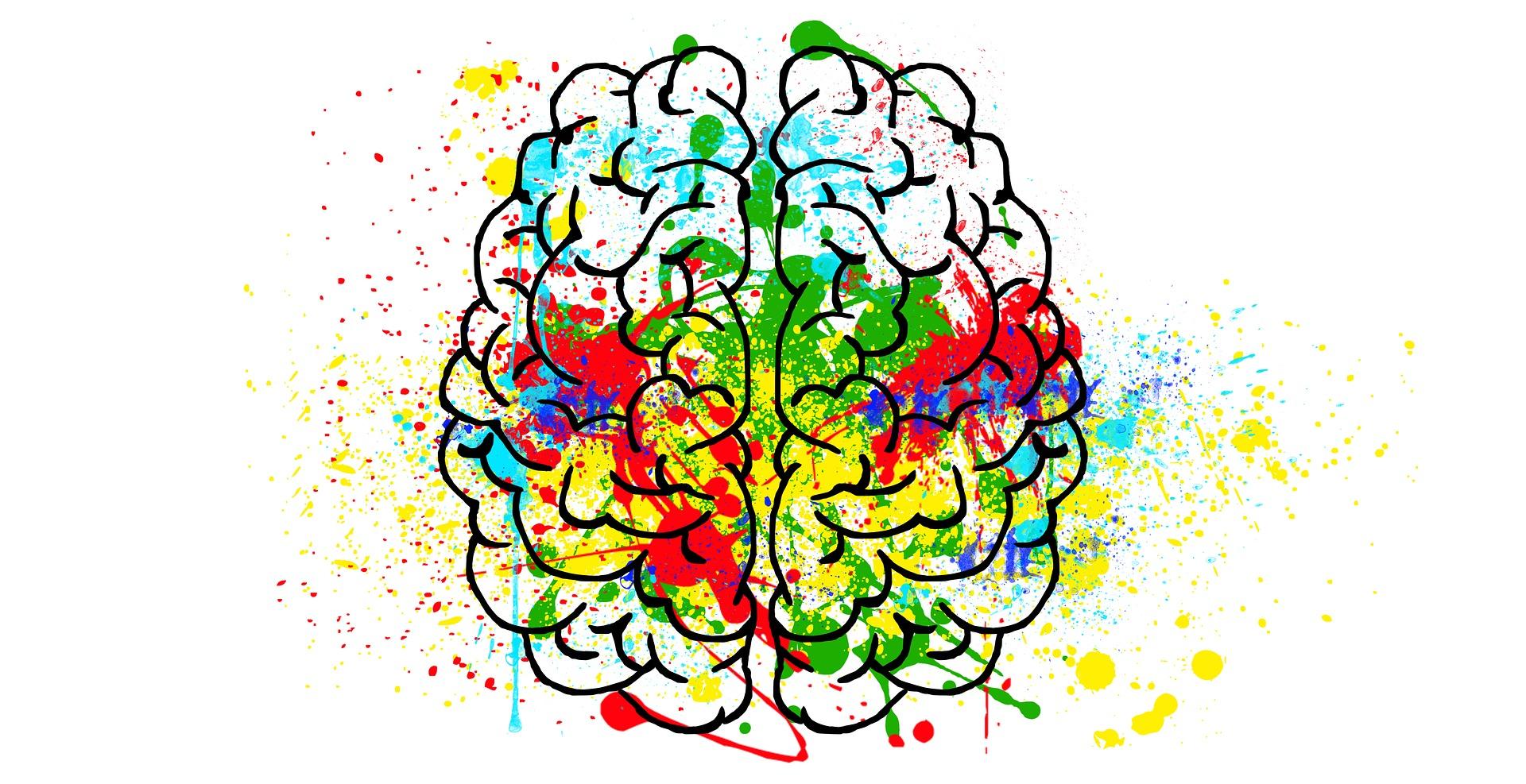 Gehirn mit Farbe